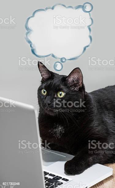Black solid cat working with laptop big boss funny concept picture id621730046?b=1&k=6&m=621730046&s=612x612&h=x4dkco 2ilnu19nhc3nbcsv5zh9idxcelhf5scuufxa=