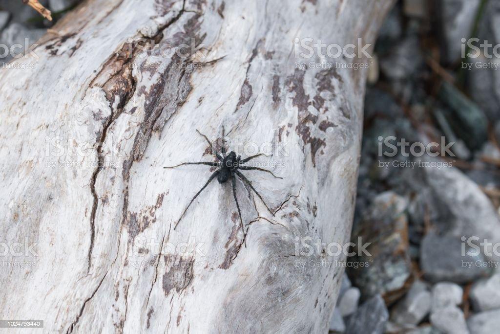 Black spider sitting on stones in the sun, Austria stock photo
