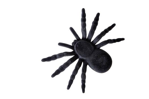 Black spider toy picture id667107428?b=1&k=6&m=667107428&s=612x612&w=0&h=fyk4 snkqugbfwubheubonudwe lsqyhf8osf2cy6jy=