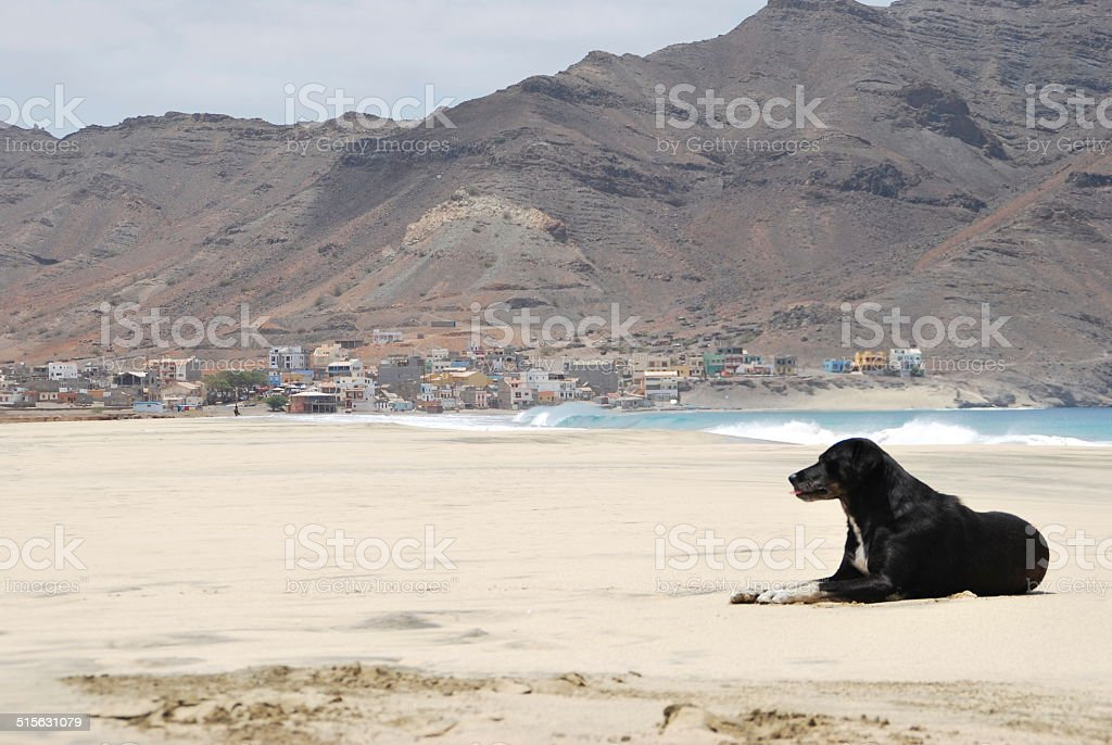 Mancha negra stock photo