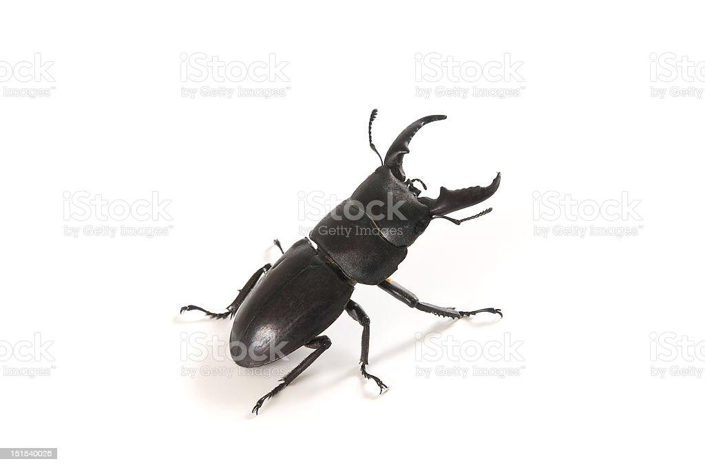 Fotografía de Escarabajo Negro y más banco de imágenes de Animal ...