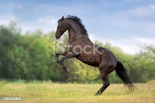 Horse rearing up on green spring meadow