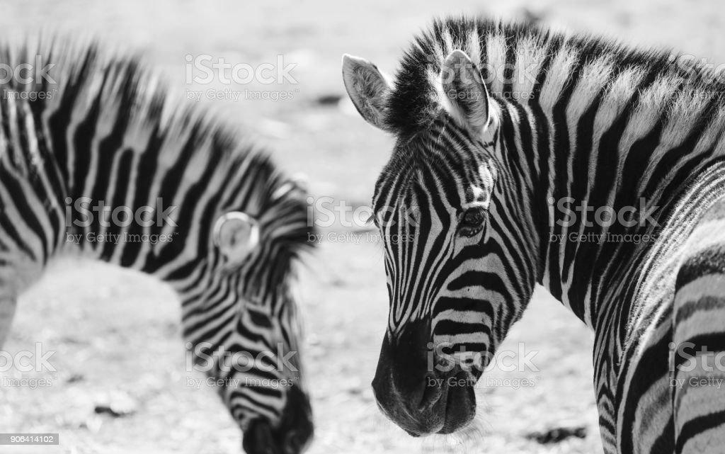 Black Stripes stock photo