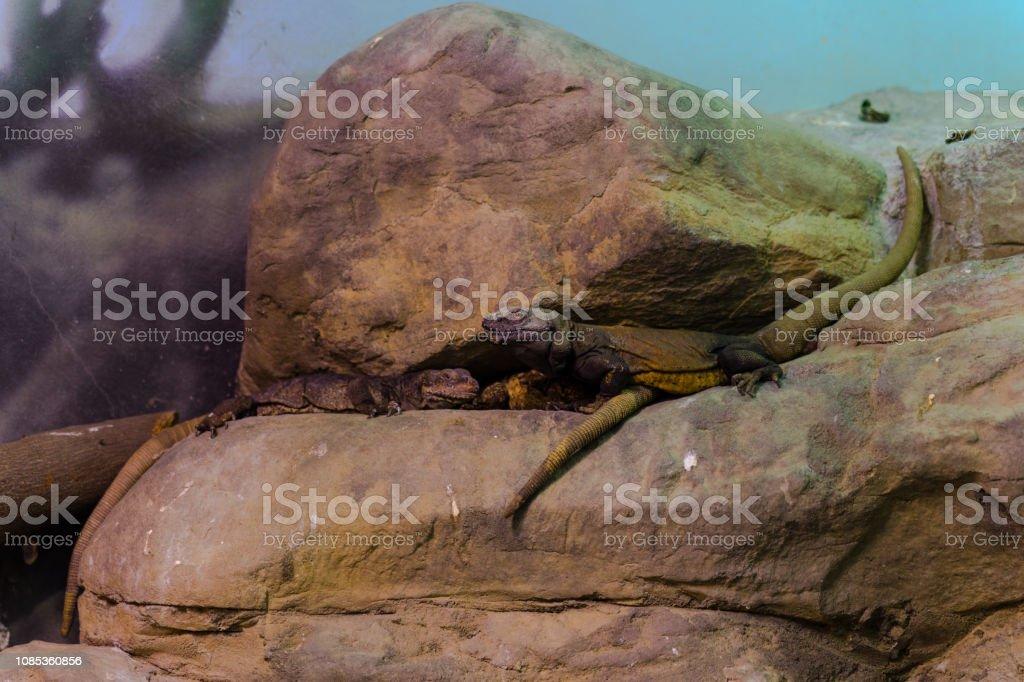 Animal, Living Organism ,Reptiles