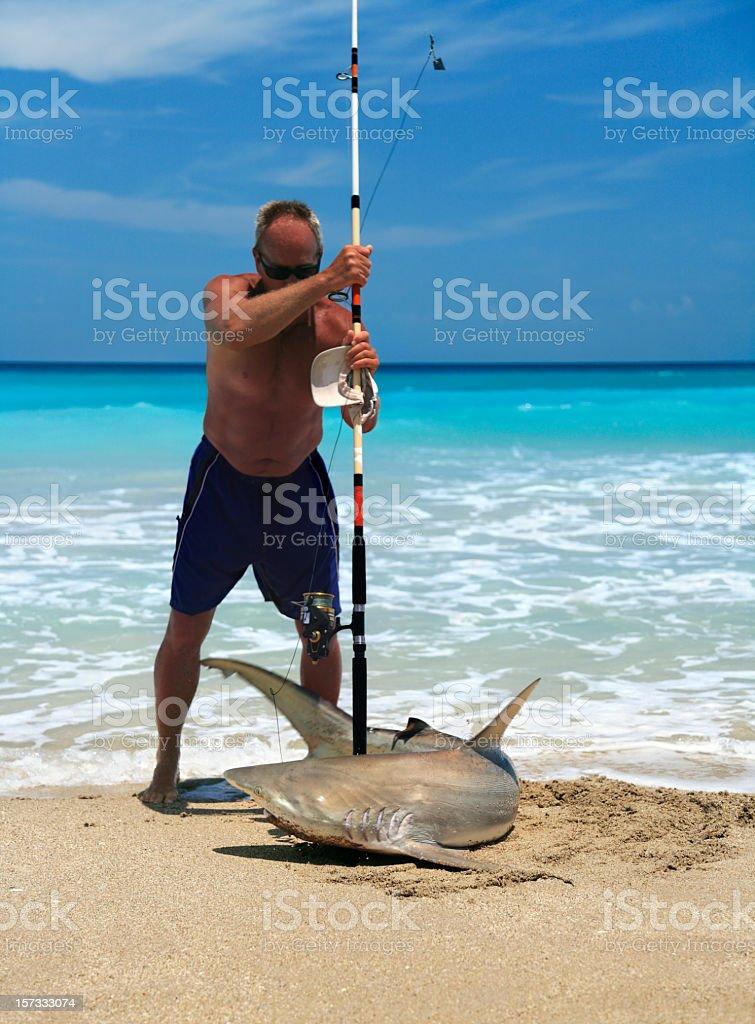 black tip reef shark royalty-free stock photo