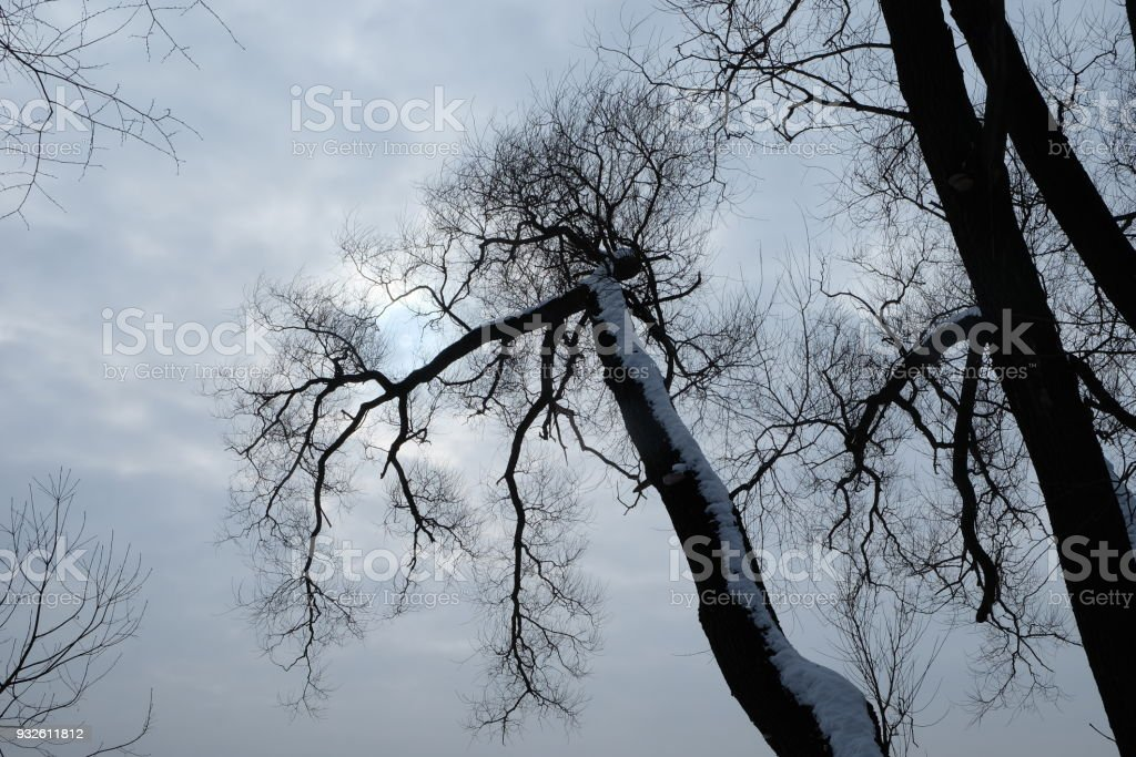 Black tree branches silhouette without leaves. stock photo
