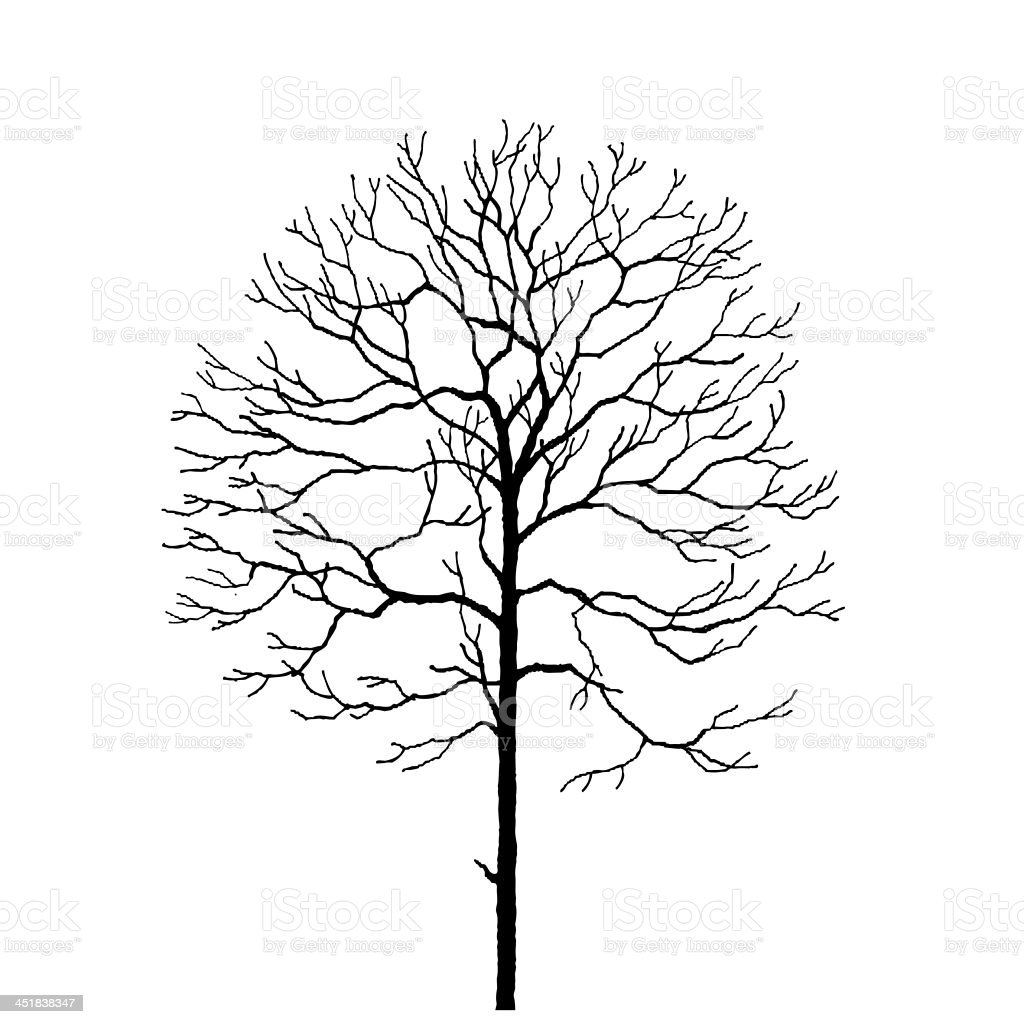 black tree silhouette isolated on white background, vector stock photo