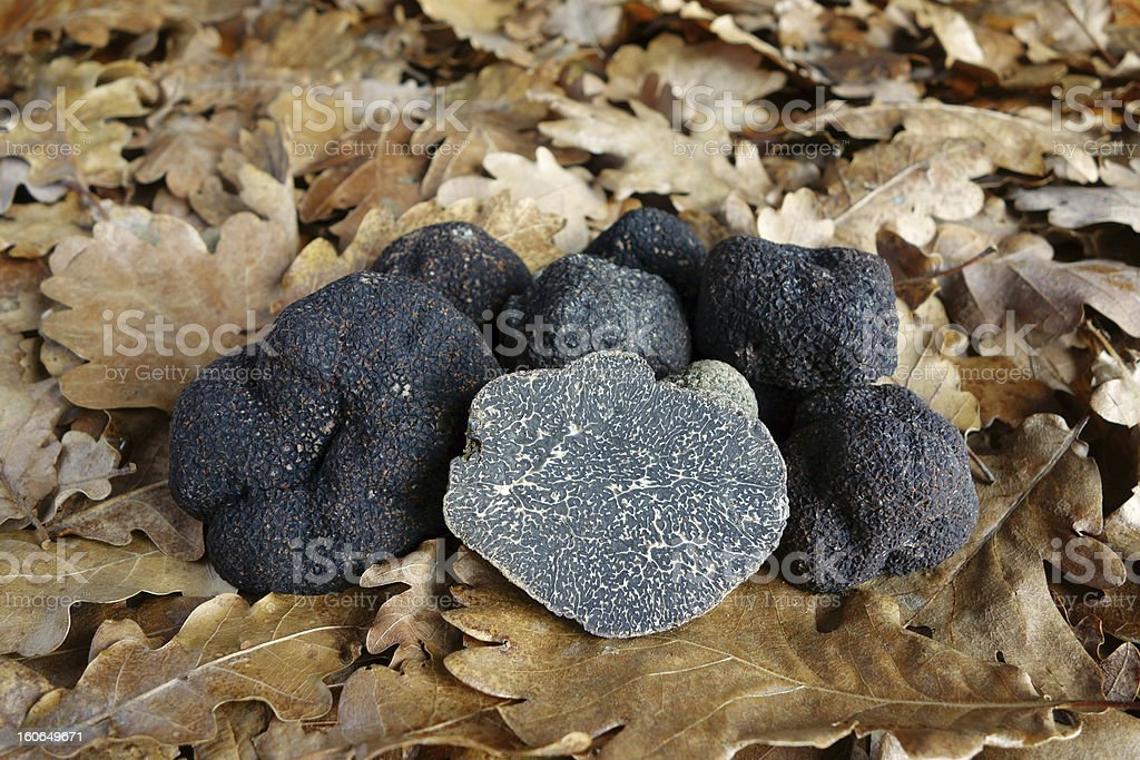 black truffles (Tuber melanosporum) stock photo