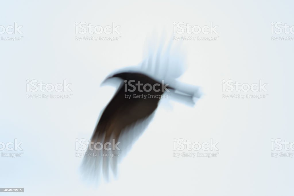 Black vulture flying - abstract stock photo