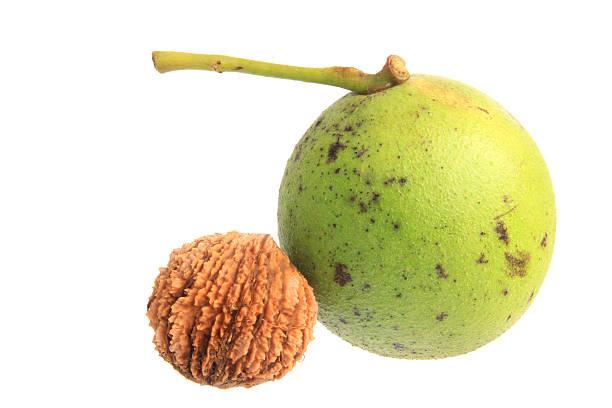 Black walnut (Juglans nigra) – Foto