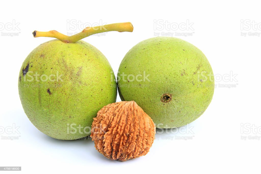 Black walnut (Juglans nigra) stock photo