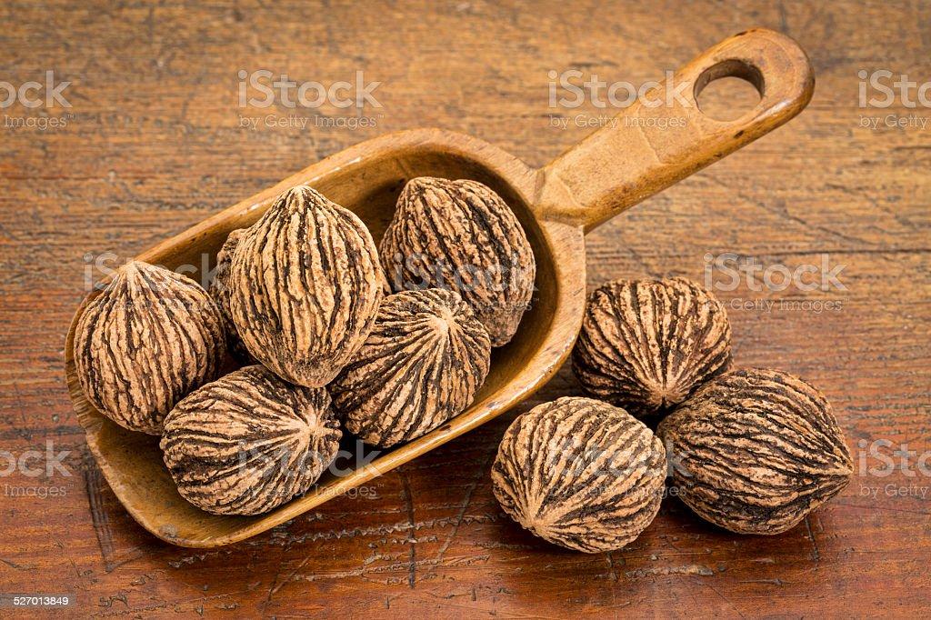 black walnuts in rustic scoop stock photo