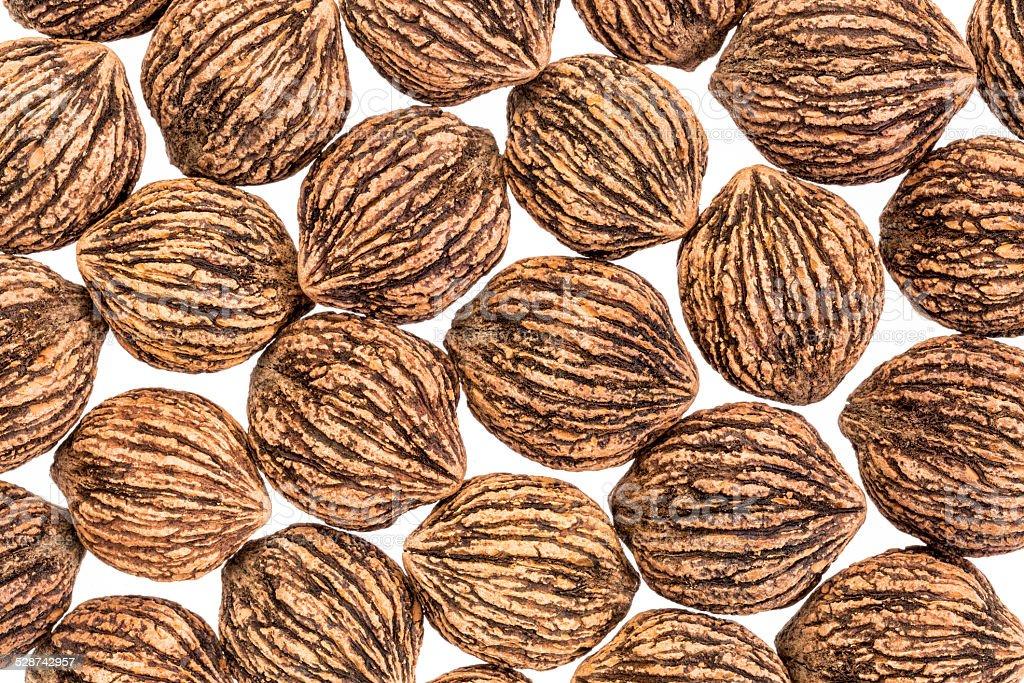 black walnuts in shells stock photo