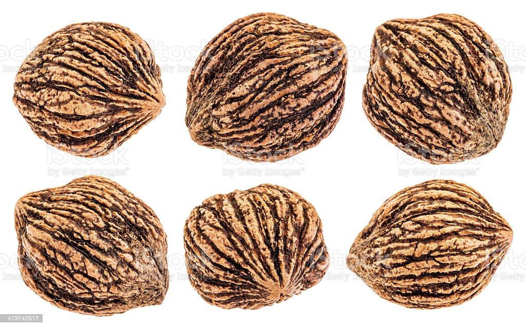 black walnuts isolated stock photo