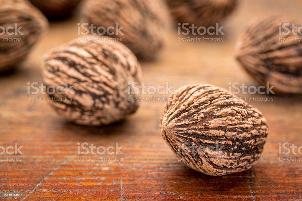 black walnuts stock photo