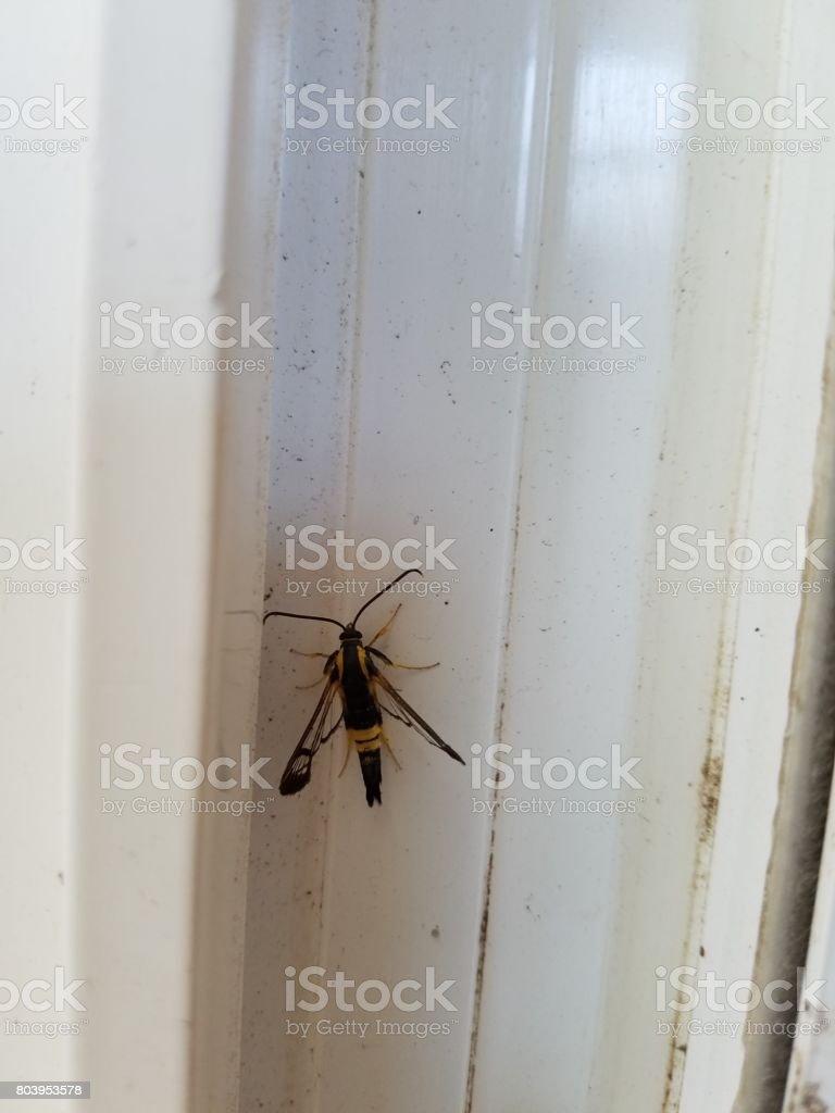 black wasp in door stock photo