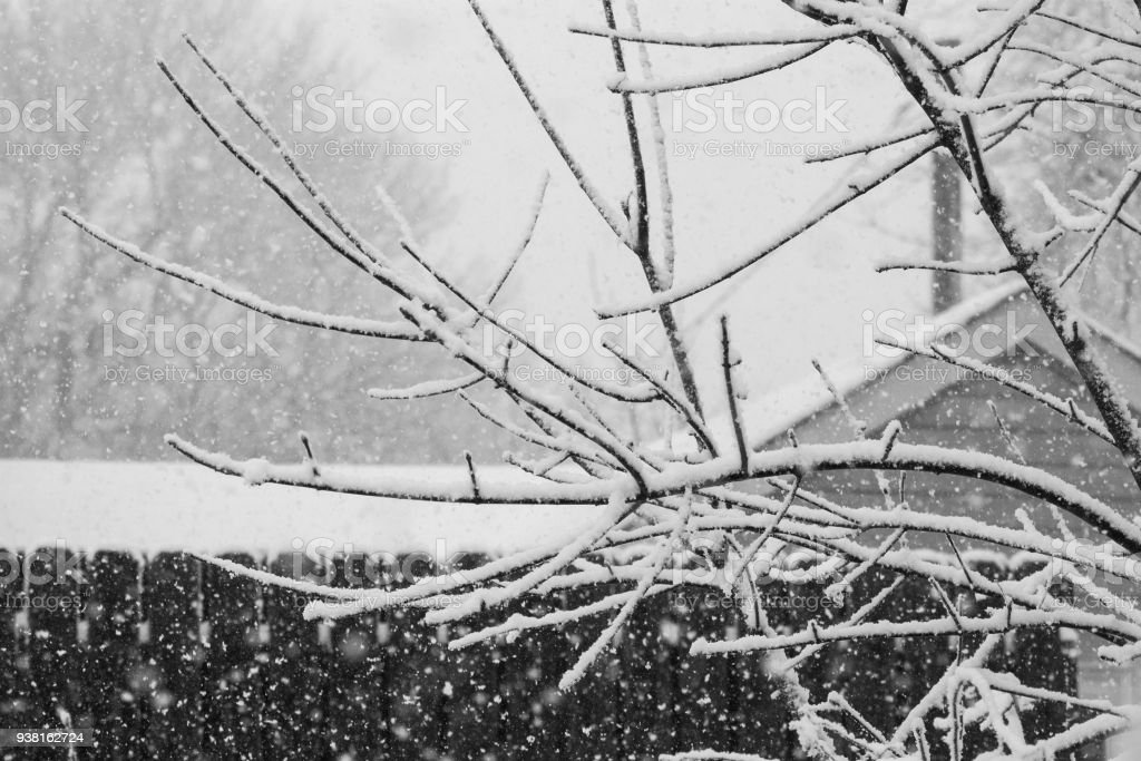 Black & White Backyard Snow Branches stock photo