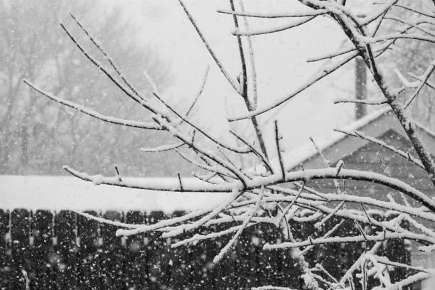 Black & White Backyard Snow Branches stock photo