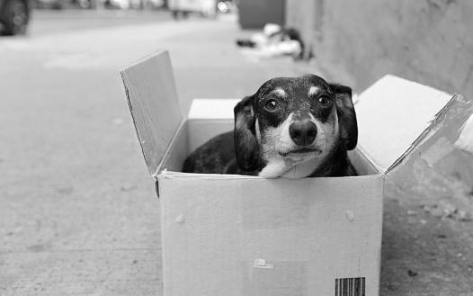 Black & white image small, stray dog