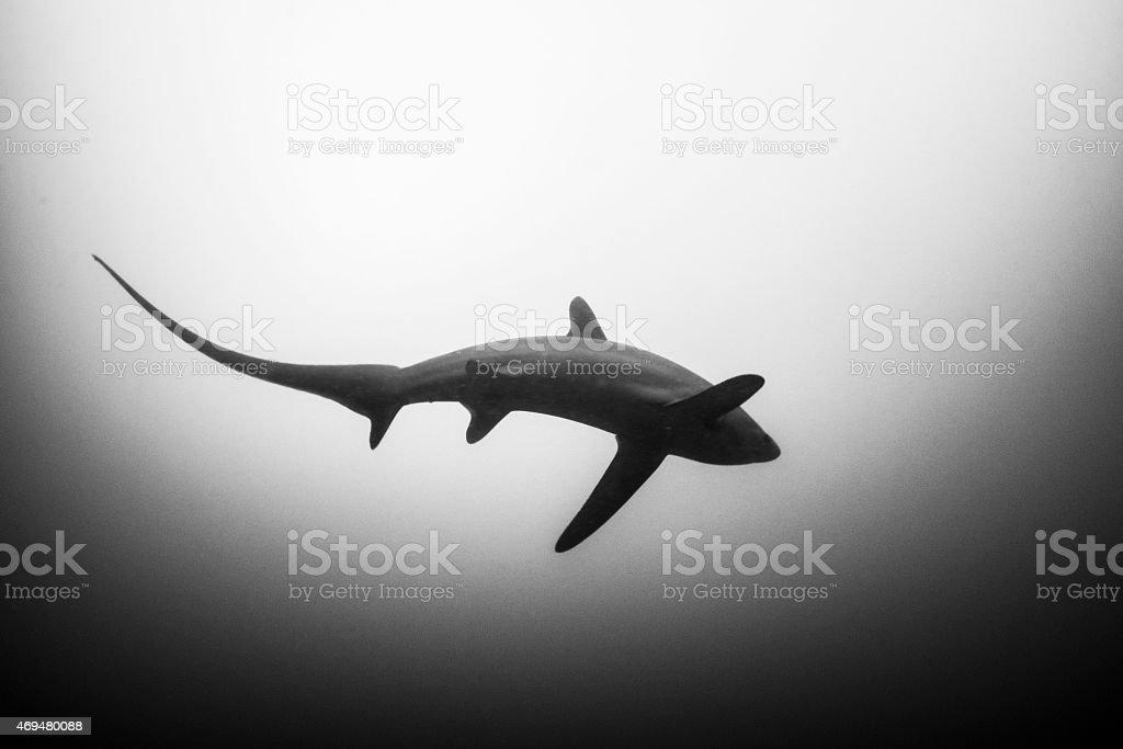 Black & White stock photo