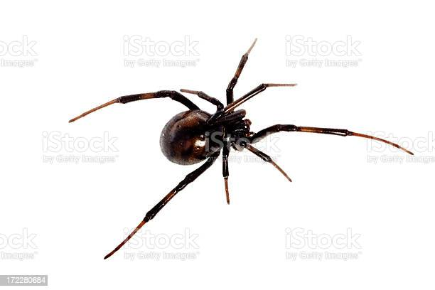 Free arachnophobia Images, Pictures, and Royalty-Free
