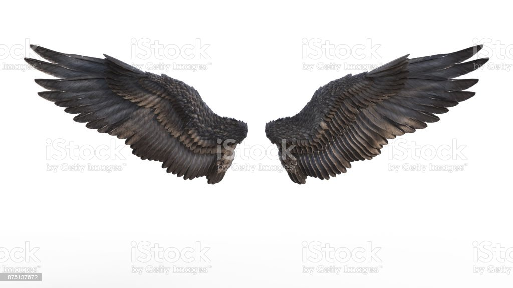 Black Wing stock photo