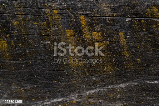 Black weathered wooden texture with yellow fungus spots.