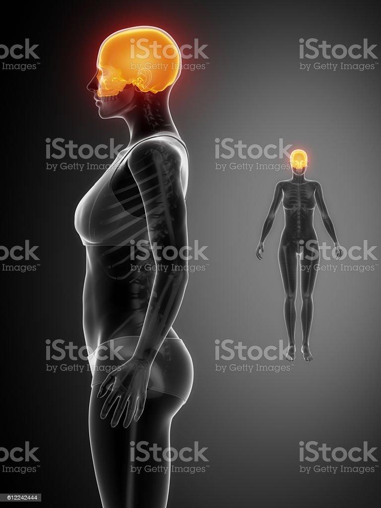 Cranium Black Xray Bone Scan - Stockfoto   iStock