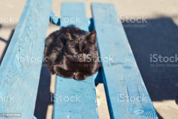 Black yard cat lying on a wooden bench picture id1142422559?b=1&k=6&m=1142422559&s=612x612&h=983bxrk4pkyccl zaznd40ry8esr2zkedb8es4exmmk=