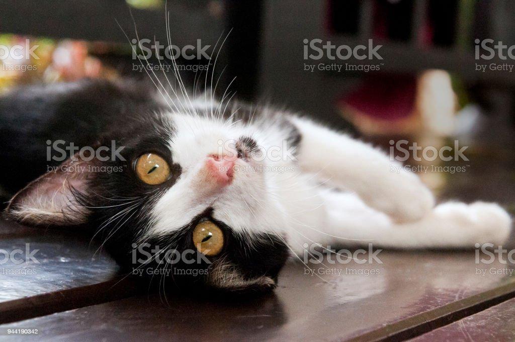 Black-and-white kitten stock photo