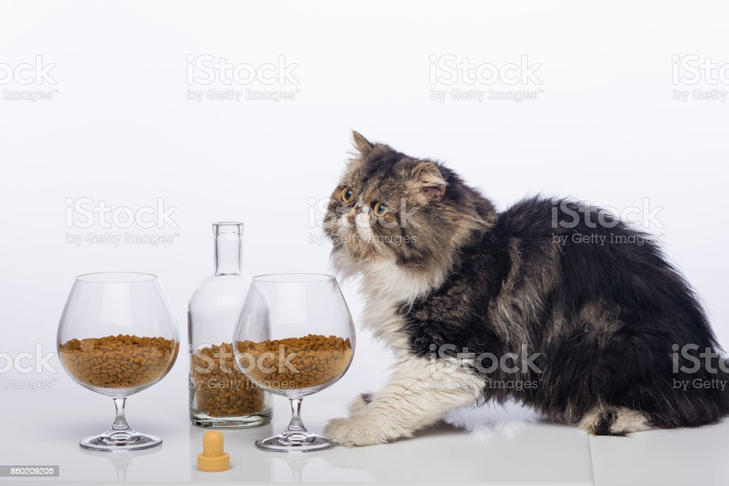 Black-and-white Persian cat, bottle cognac and two glass filled with a dry feed for cats стоковое фото