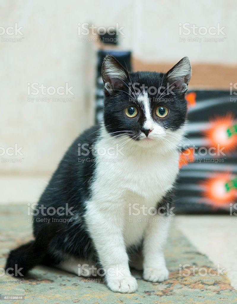 black-and-white rural kitten stock photo