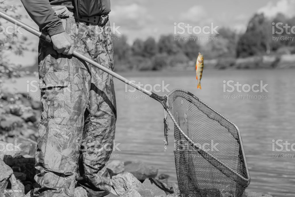 Black-and-white toned natural pond. Trophy fishing. Small goldfish on fishing line, old fish net with holes. Concept luck, fortune, finance, investment, success, irony stock photo
