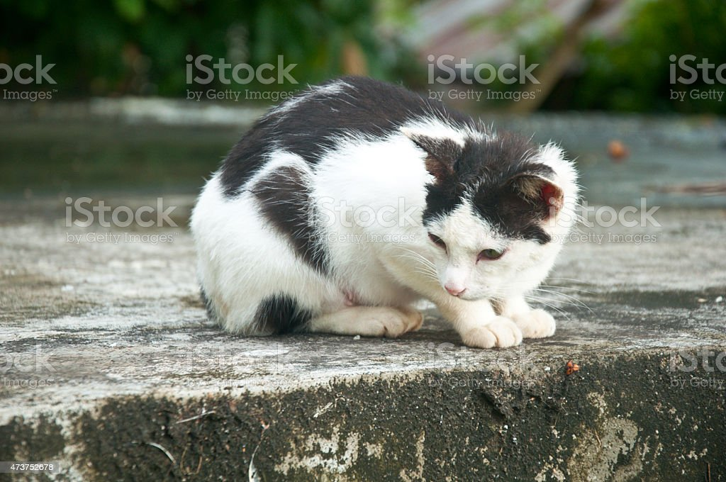 Black-an-white alley cat staring wary at the street. stock photo