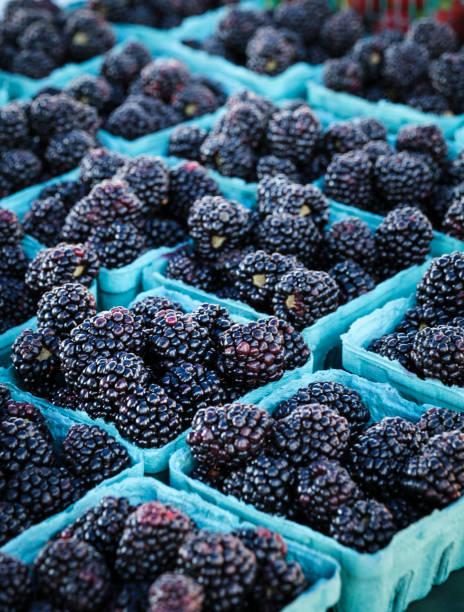 Blackberries at the Farmer's Market stock photo