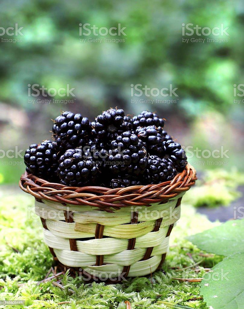 design de qualité 704a5 d7b92 Blackberries Basket Stock Photo - Download Image Now - iStock