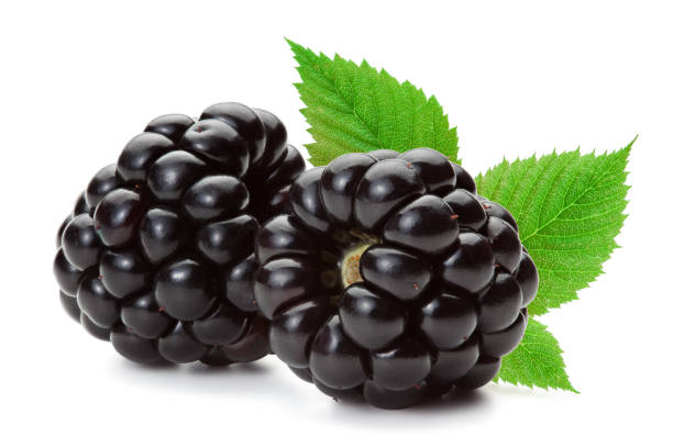 Blackberries isolated on the white background. Closeup of ripe blackberries with leaves isolated on the white background, clipping path included. blackberry fruit stock pictures, royalty-free photos & images