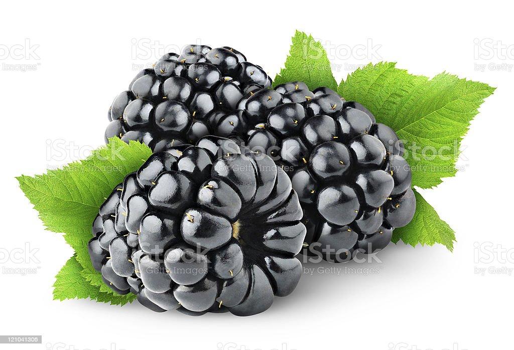 Blackberries on white background royalty-free stock photo