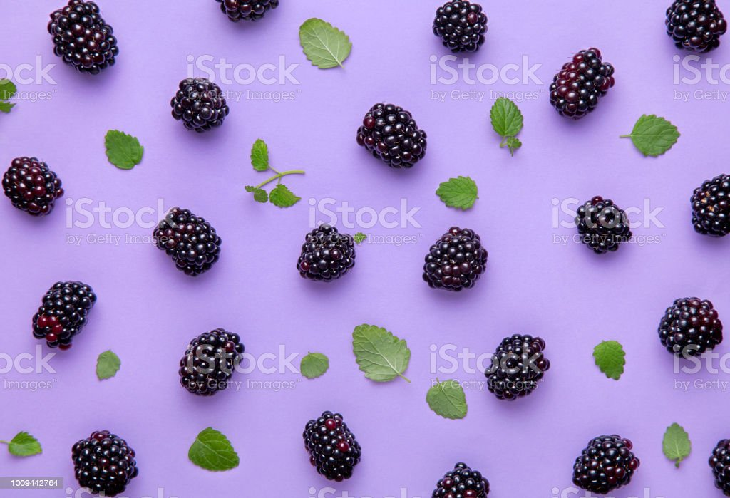 Blackberry and green leaves pattern on a purple background. Top view stock photo