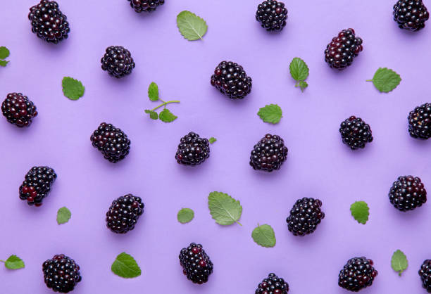 Blackberry and green leaves pattern on a purple background. Top view Blackberry and green leaves pattern on a purple background. Top view blackberry fruit stock pictures, royalty-free photos & images