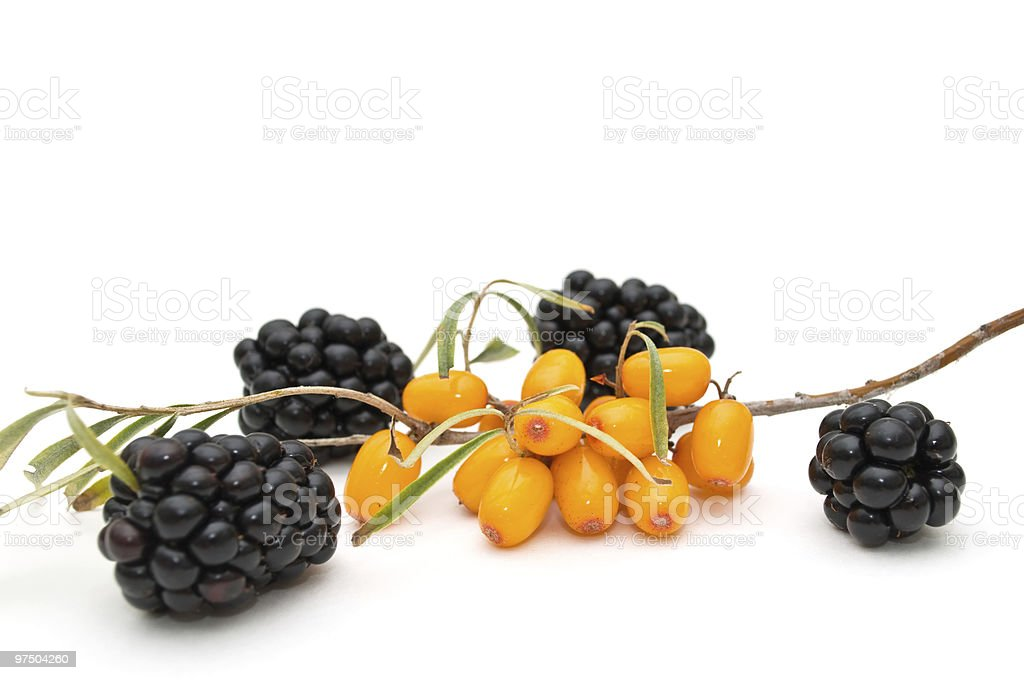 Blackberry and sea-buckthorn. royalty-free stock photo