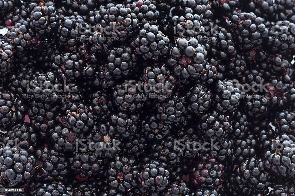 Blackberry Background stock photo