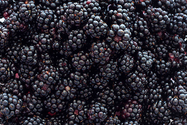 """Blackberry Background """"A close-up photograph of fresh, ripe blackberries."""" blackberry fruit stock pictures, royalty-free photos & images"""
