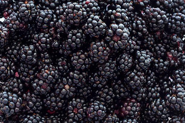 Blackberry-Hintergrund – Foto