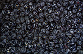 Blackberry fruit background