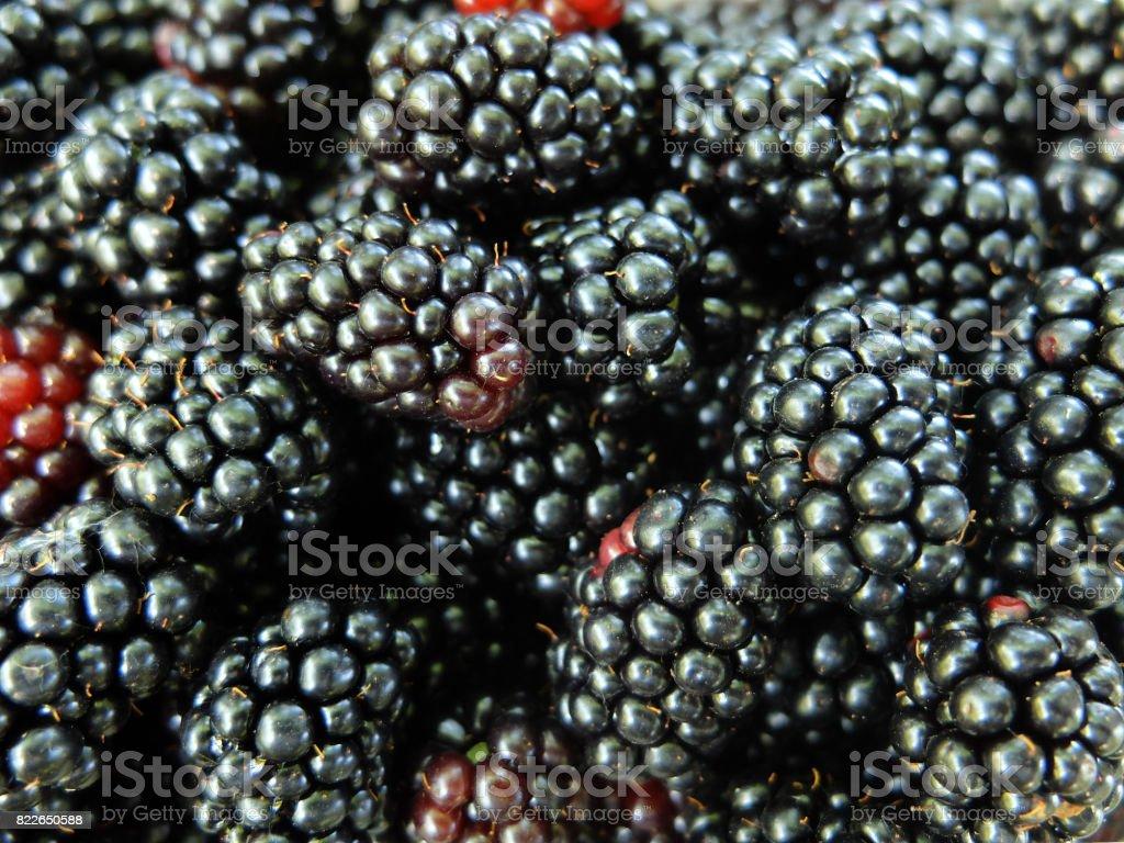Blackberry Fruit Background. stock photo