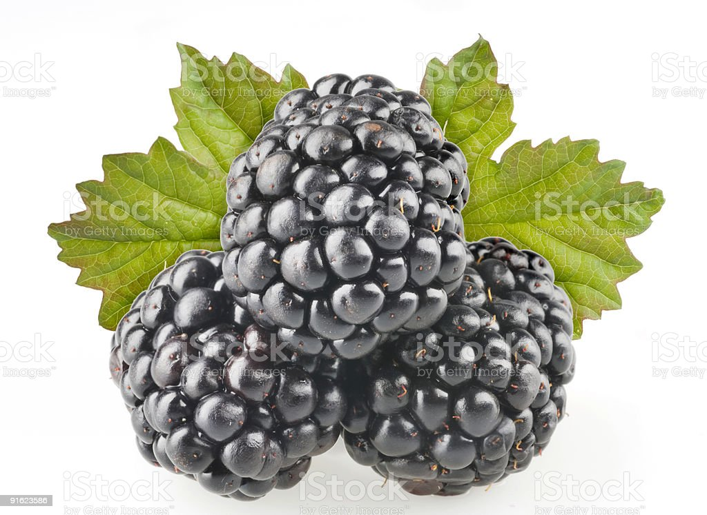 Blackberry fruit objects isolated over white background royalty-free stock photo