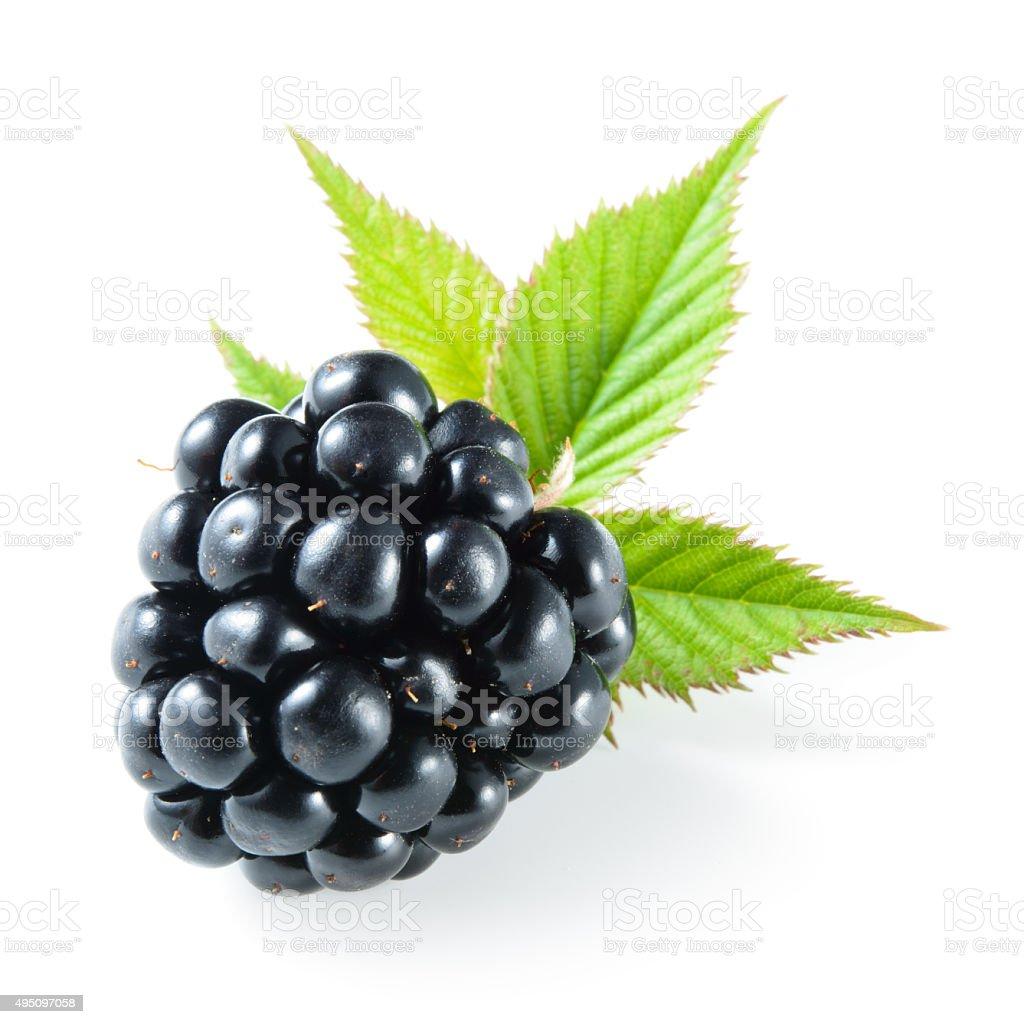 Blackberry isolated on white. stock photo