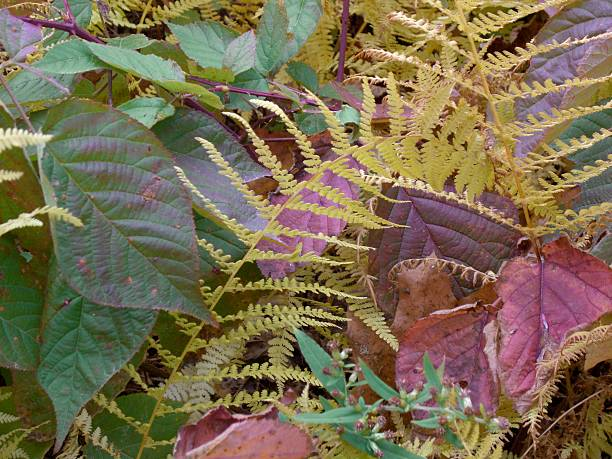Blackberry Leaves and Yellow Fern stock photo