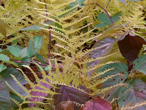 Blackberry Leaves and Yellow Ferns stock photo